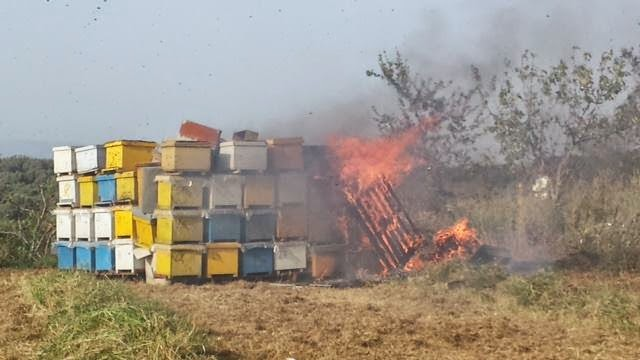 Roghi di alveari: api a rischio estinzione?