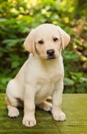 quanto costa un cane