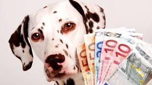 Quanto costa un cane: costo per comprare e mantenere un cane