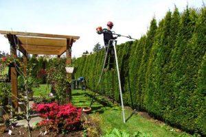 quanto guadagna un giardiniere, come diventare giardiniere