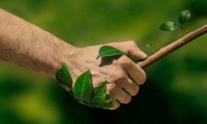 Ecosostenibilità: cos'è la sostenibilità e perché è importante?