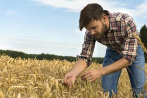 Colture Più Redditizie Per Piccole Aziende Agricole