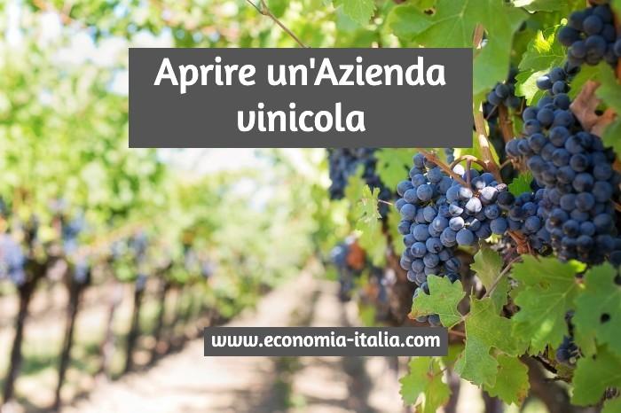 Aprire un'Azienda Vinicola. Come Fare? Guida e Suggerimenti Utili